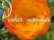 Tutoriel : les plantes magiques 14353820150430140709
