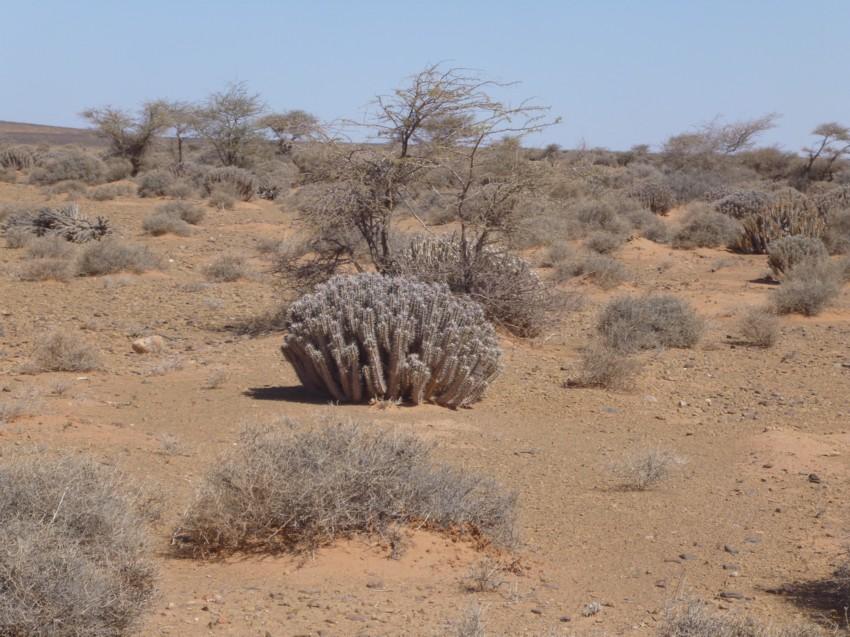 Le Grand Sud du Maroc - II 149306088