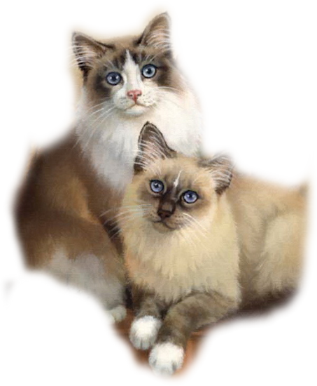 Mes tubages Chats 152535TubMel34