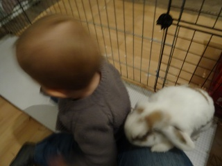 Nina, lapine bélier, née en aout 2011 - Page 9 152666DSC02176