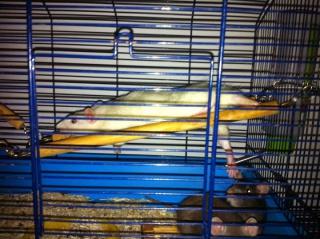Nouvelle cage, palace :D 153768114704cadal
