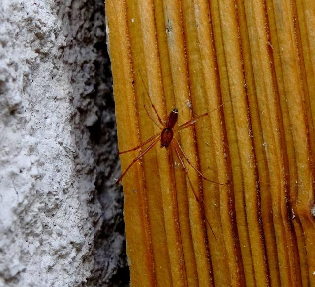 La maison des araignées 154379DSC02589