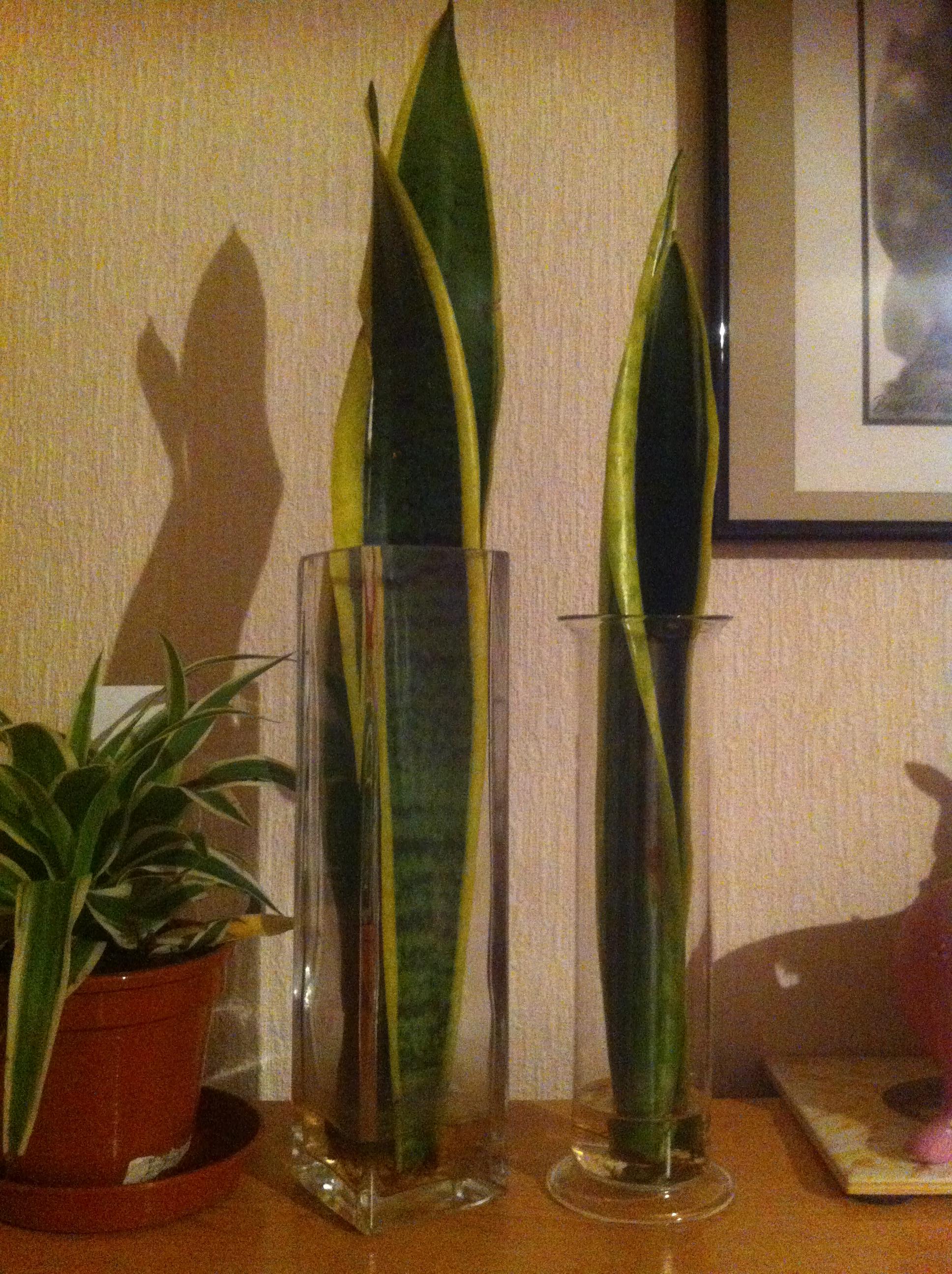 recherche plante facile et increvable  157654Photo170612222516
