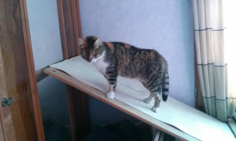 DUCHESSE - chatte femelle, née 2011/2012, borgne - (PASCANI) - adoptée par Chantal Pascal (dpt 63) - Page 4 15829620151203114150