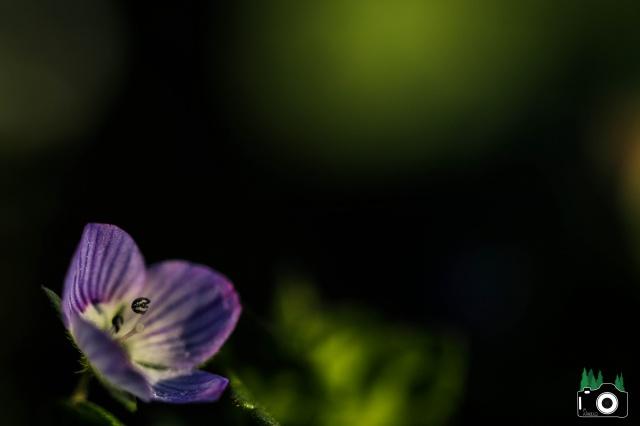 Je n'aime que toi petite fleur des champs... 159826IMG8800
