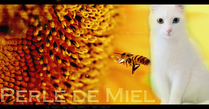 Baptême Icy-Honey / Perl-Waterey / Ice 160162Sanstitre130