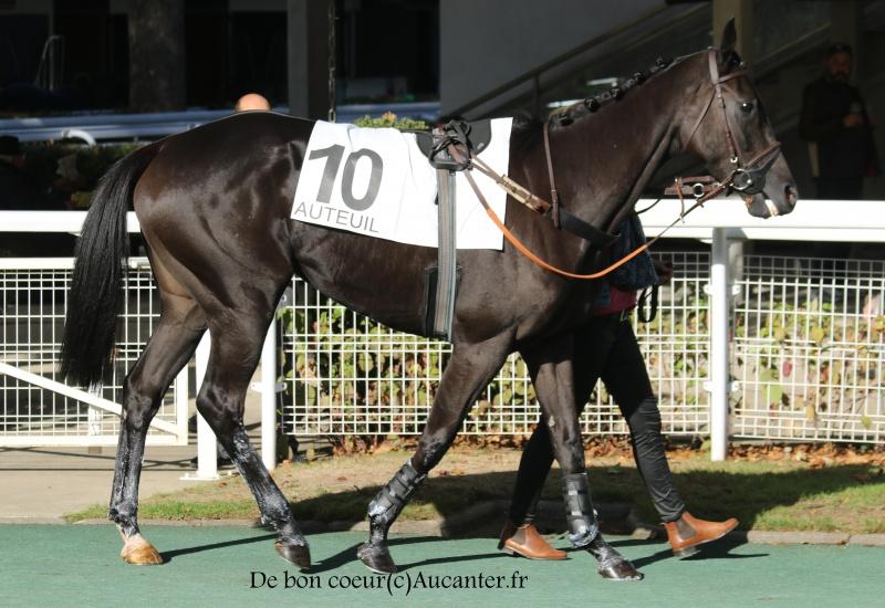 Photos Auteuil 15-10-2016 1620525J6A8680