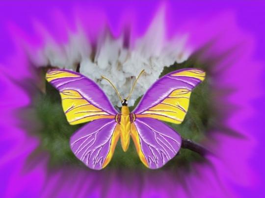 Tubes Papillon 164712Melgibson4ge4