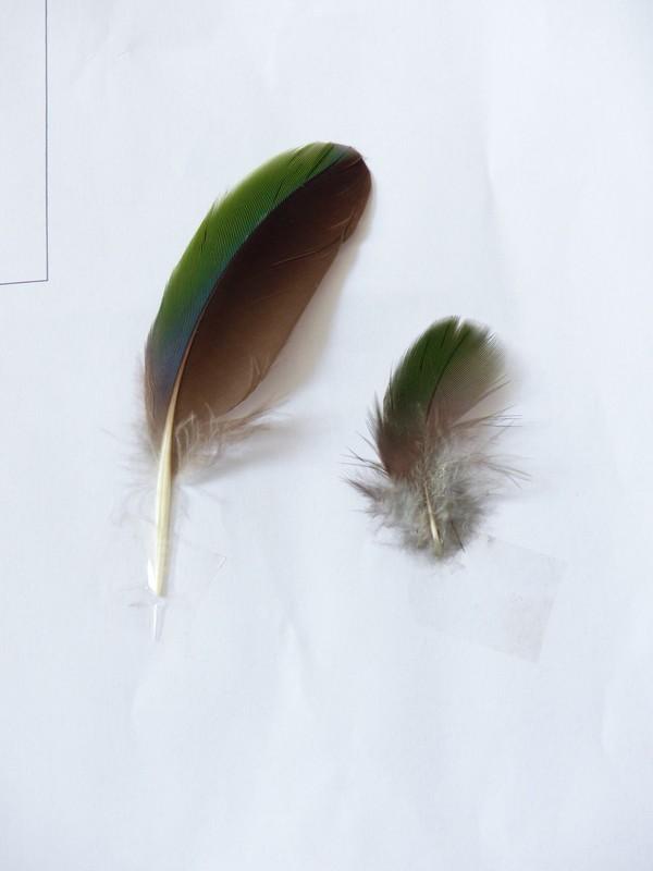 ma collection de plumes ! 164741P1470396