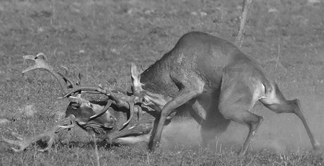 """""""Scène de chasse"""" 167398noir"""