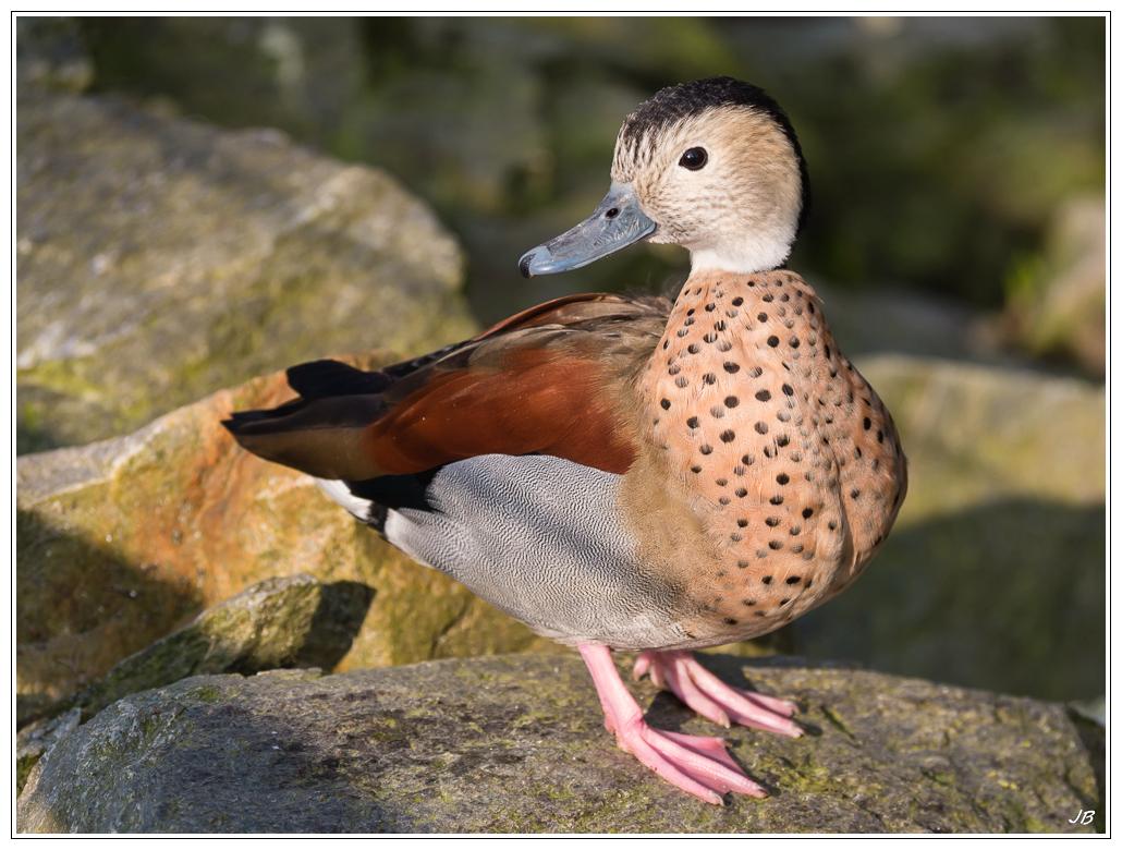 Zoo de Beauval : les oiseaux 167900LR53P1130984