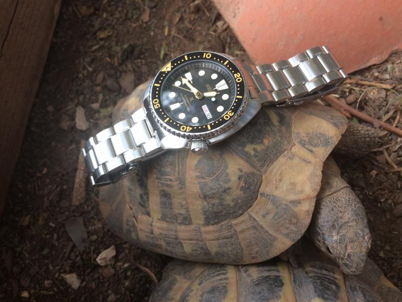 Photos Seiko New Turtle - Page 4 168778IMG7522