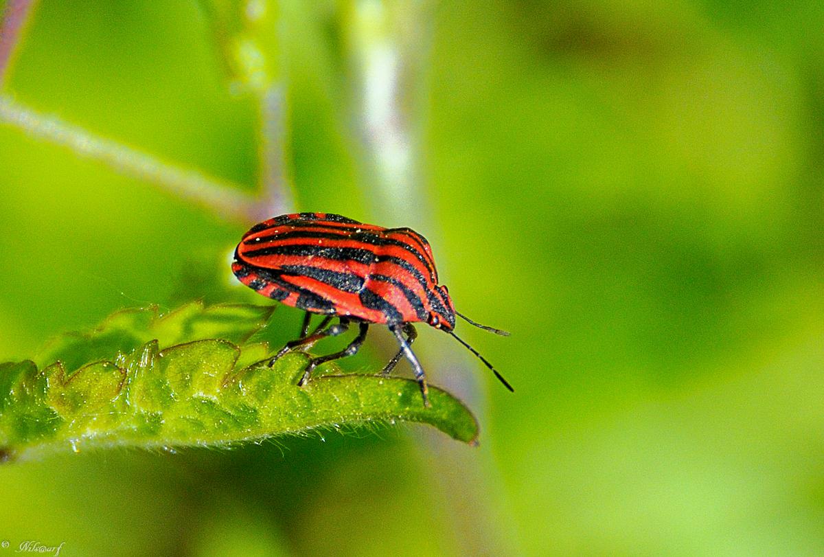 Fil ouvert - Proxi Insectes butinant - Page 12 169601DSC1914140420122245DxO