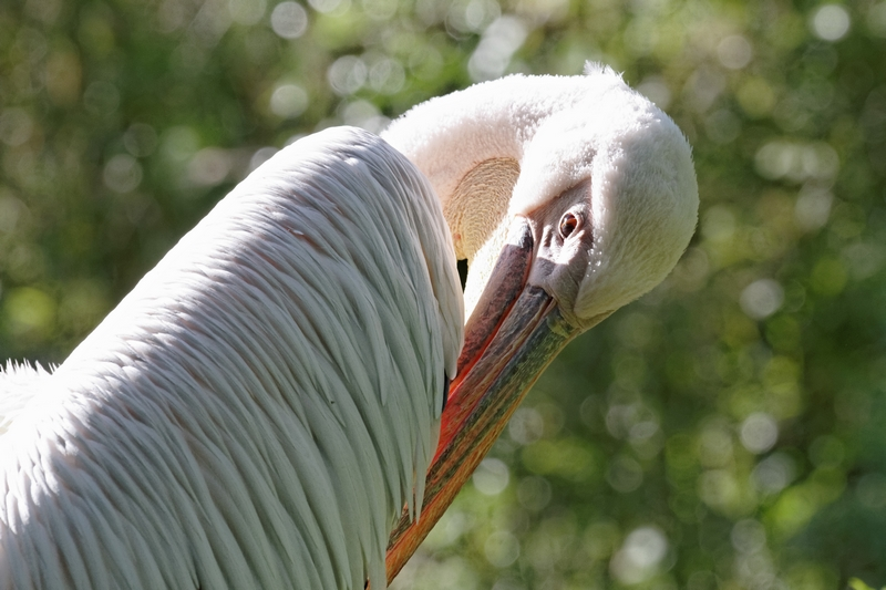 Le zoo de Doué la Fontaine 169668ZoodeDoulaFontaine49006DxO800x600