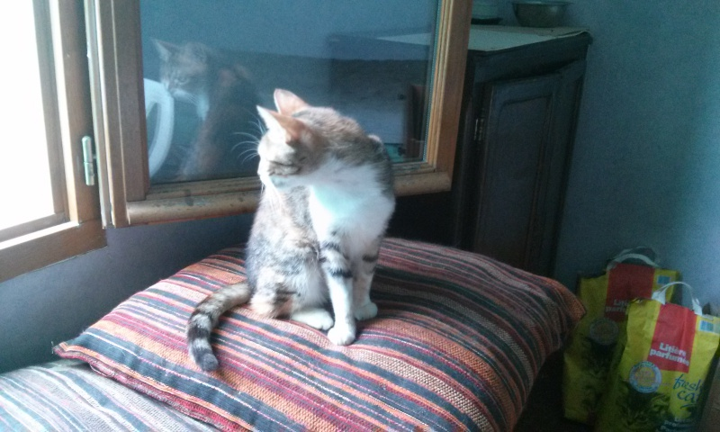 DUCHESSE - chatte femelle, née 2011/2012, borgne - (PASCANI) - adoptée par Chantal Pascal (dpt 63) - Page 3 1749183449