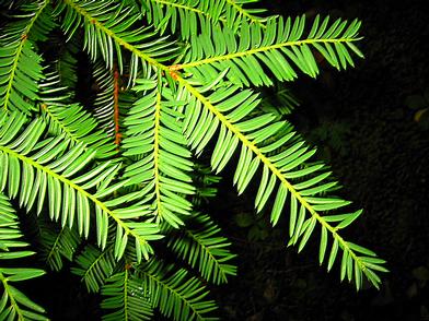Plantes toxiques ou à risques 175012IFblatt