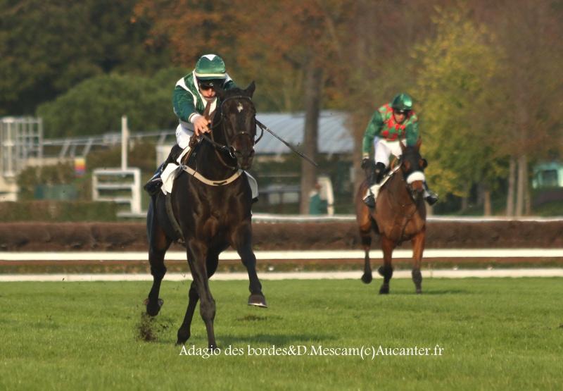 Photos Auteuil 6-11-2016 1751865J6A0495
