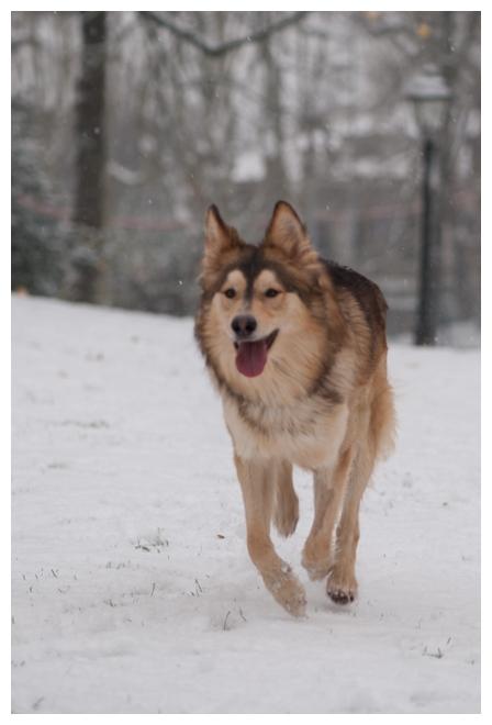Nos loups grandissent, postez nous vos photos - Page 9 176450DSC4971640x480