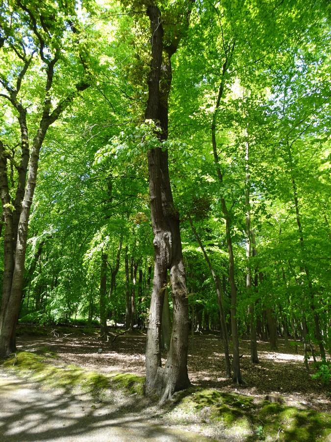 [fil ouvert] la forêt dans tous ses états - Page 14 180624015Copier