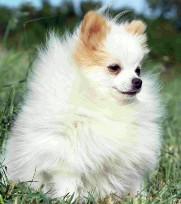 Petit chien docile cherche maître sadique 180643chien