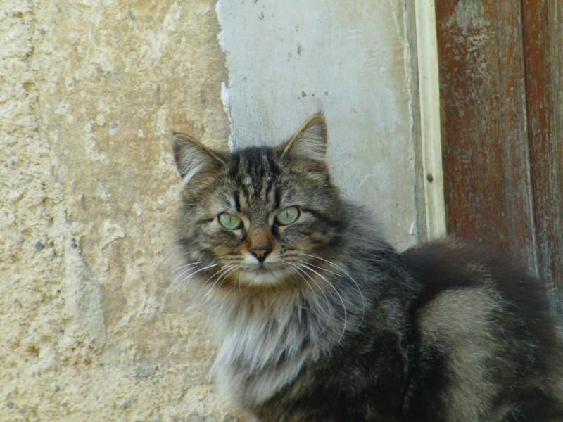 La voix au chat pitre 180674chat1