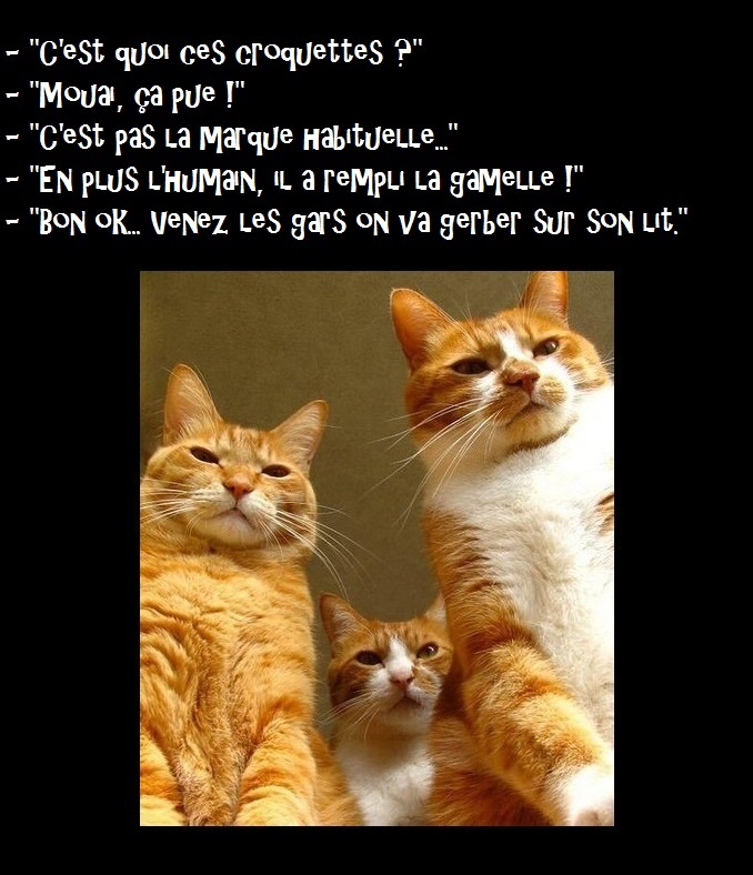 HUMOUR - Drôles de bêtes... - Page 8 180866C1q4pXWQAAOlu6