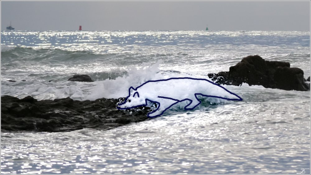 Golfe du Morbihan : le vieux loup de mer albinos 181066LR6PGH58350loup