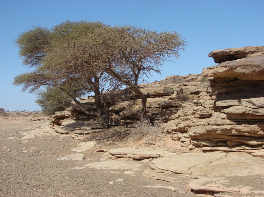 Le Grand Sud du Maroc - II 182817092