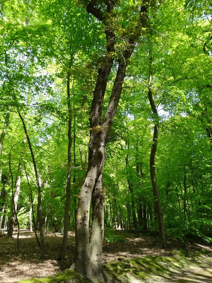 [fil ouvert] la forêt dans tous ses états - Page 14 185145017Copier