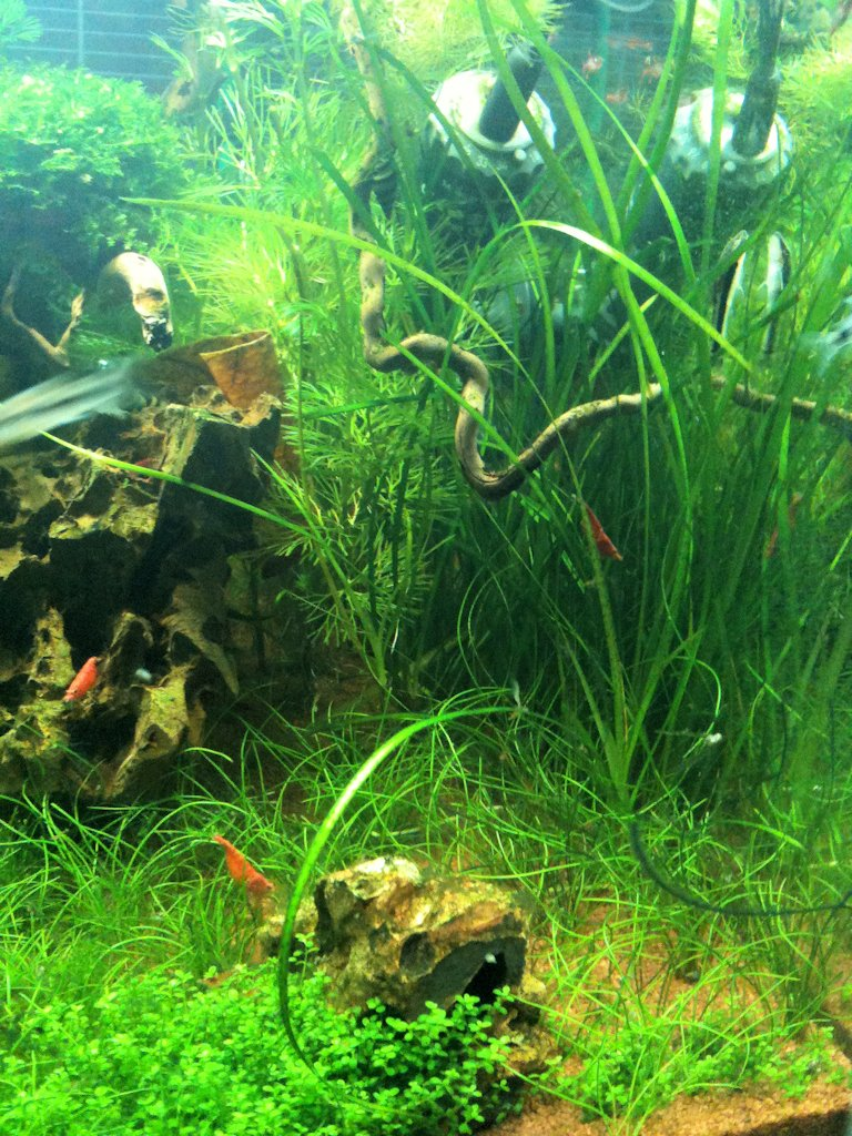 Mon Scaper's Tank 50L Aquascaping - Page 2 189399IMG0453