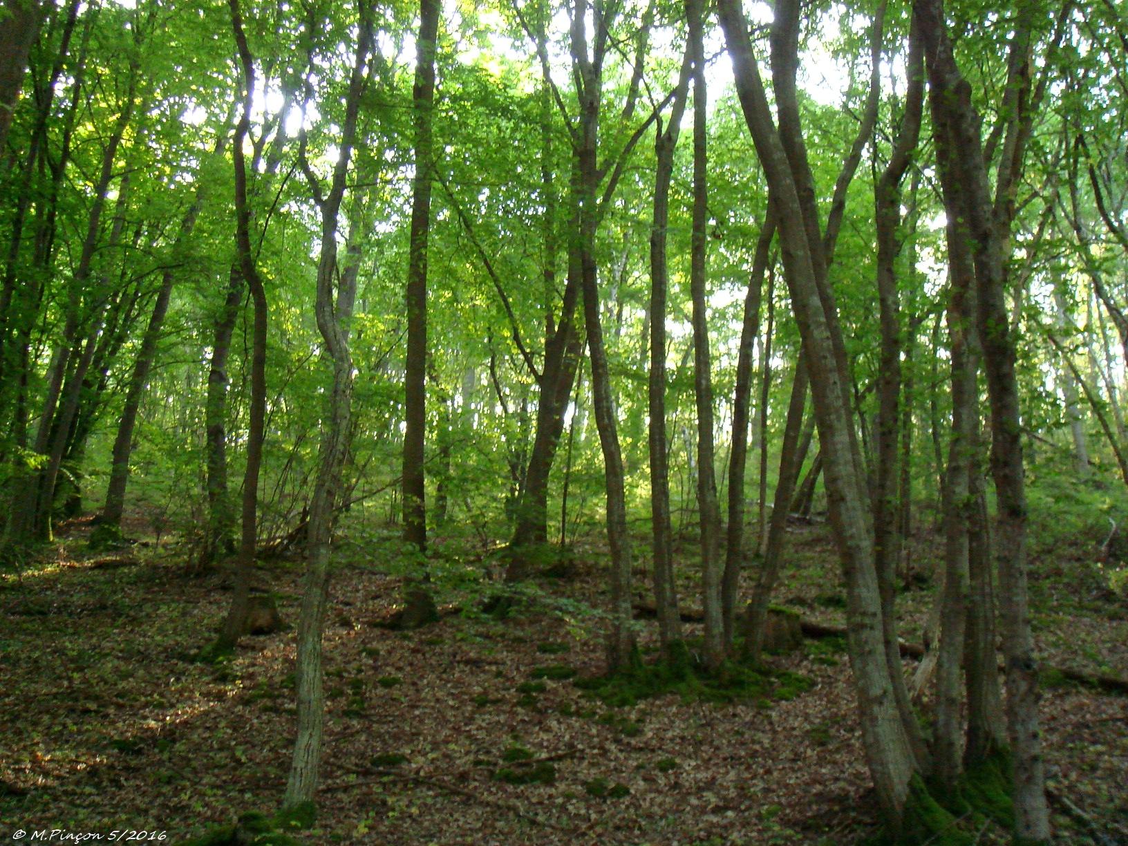 [fil ouvert] la forêt dans tous ses états - Page 5 190558DSC010412