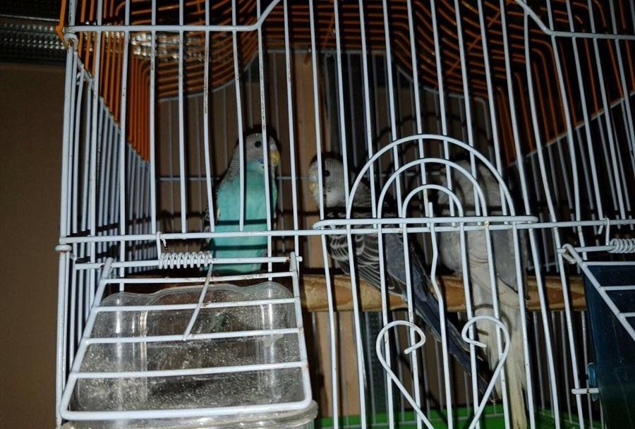 الوسم جدة على المنتدى حراج الحيوانات 195257171