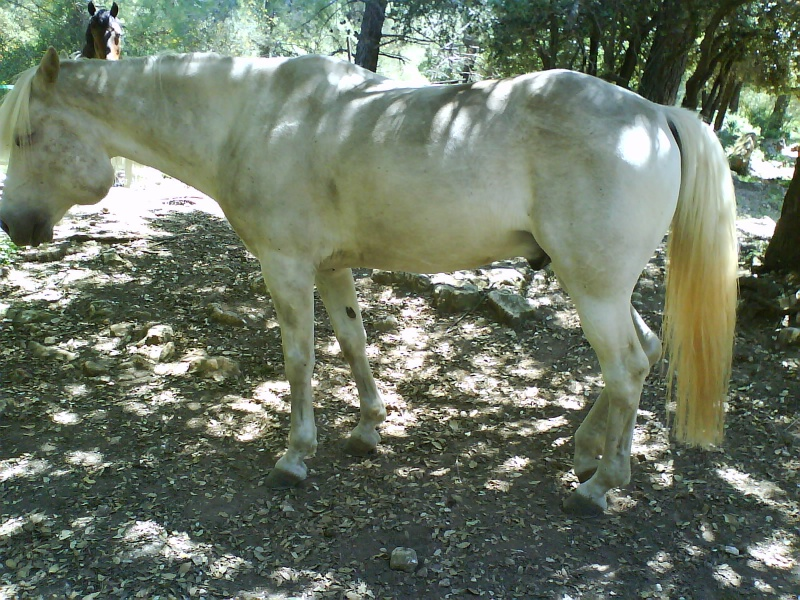 Une tumeur à la ganache a emporté mon cheval Banco. Qui a déjà vu ça ? 195369DSC00095