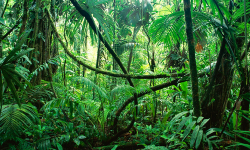 Jungle de l'Ouest