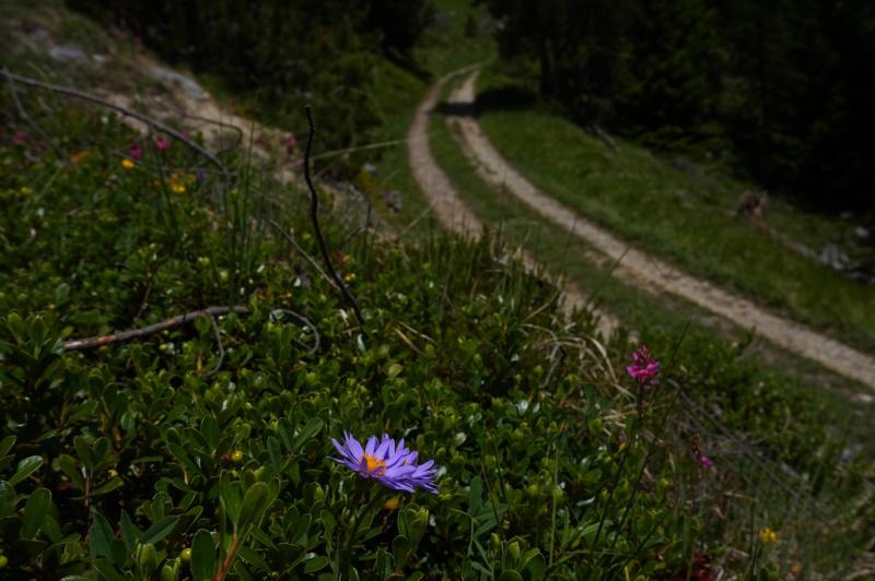 pas de carni mais de jolies plantes alpines ! 197255DSC03387