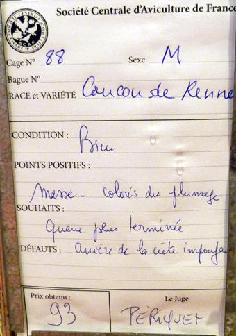 2014 - salon de l'Aviculture de Paris du 22/02/2014 au 02/03/214 - Page 3 197856P1130352