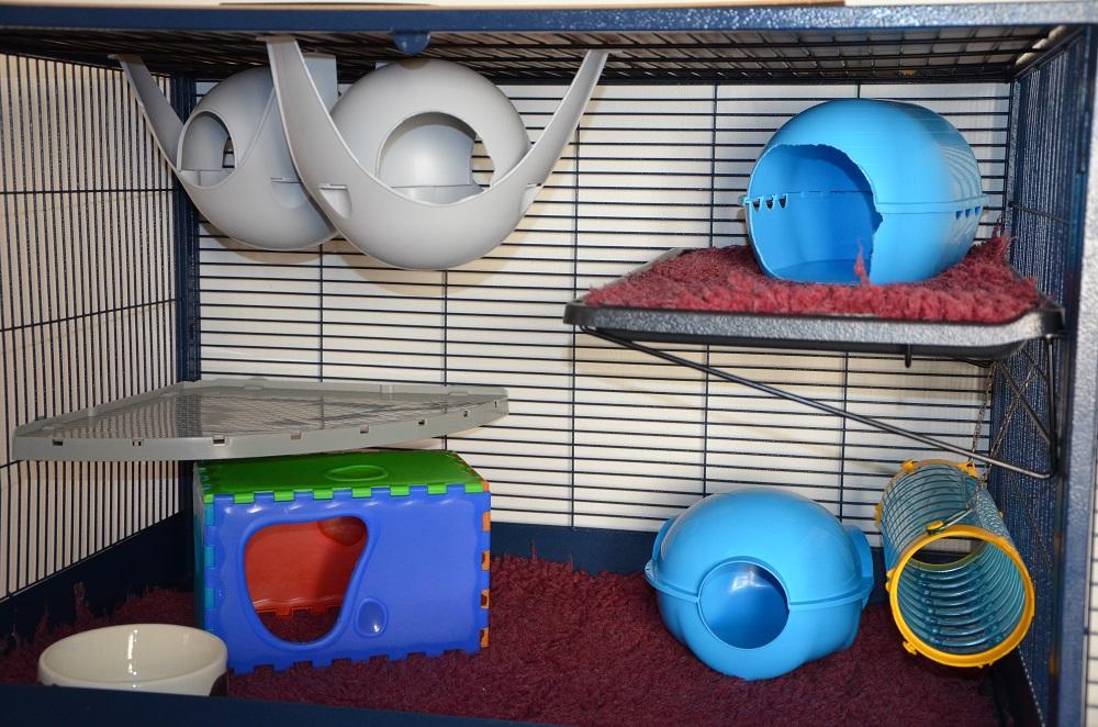 grande porte - Photos de vos cages 198232DSC4109