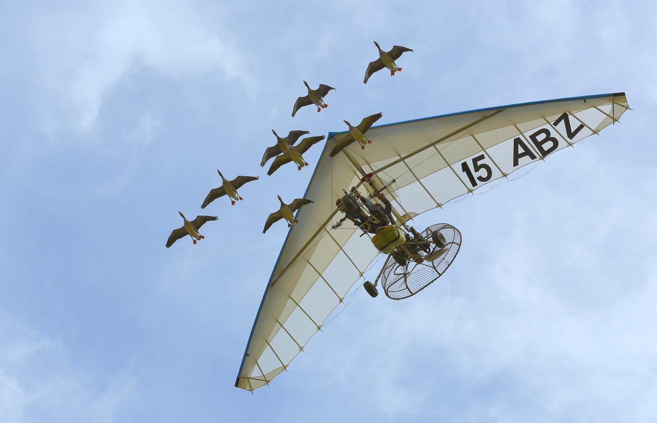 Aérodrome de Pierrelatte 26700. 203691LesOies0471
