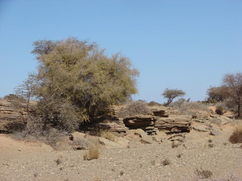 Le Grand Sud du Maroc - II 206715090