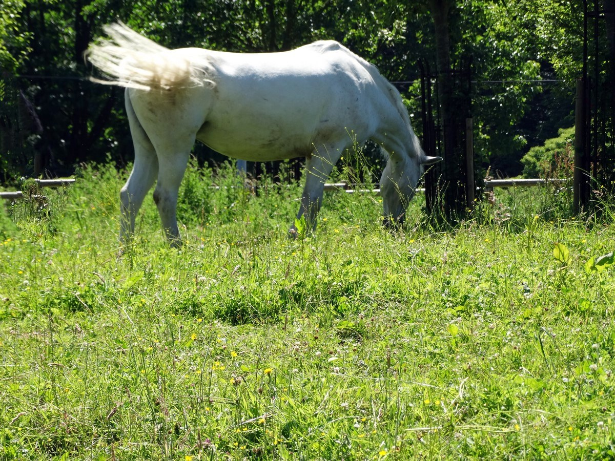 [Fil - Ouvert ] Chevaux - Page 9 209048015Copierfixed