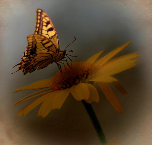 Tubes Papillon 210008Melgibson4e9