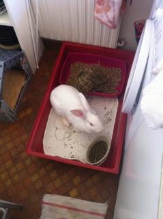 Association White Rabbit - Réhabilitation des lapins de laboratoire - Page 3 213898AppleDansMaCuisine
