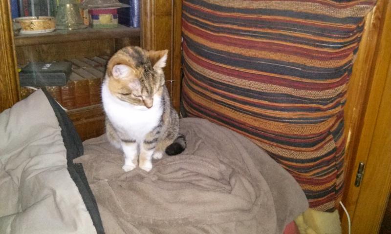 DUCHESSE - chatte femelle, née 2011/2012, borgne - (PASCANI) - adoptée par Chantal Pascal (dpt 63) - Page 4 21410099