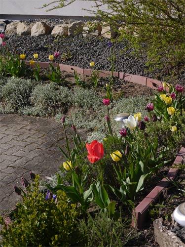 Mon jardin 2016. 215191P1150377w