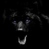 Les images des loups 215993imgdamon