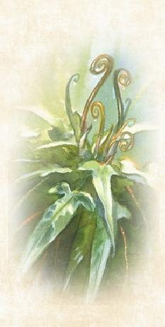 L'Herbier de MT 216557test1