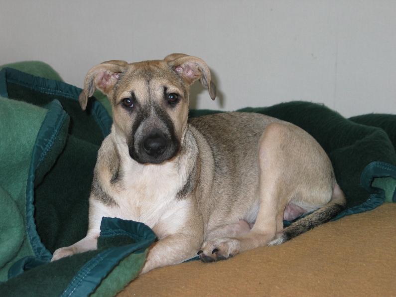 Lila, adorable chienne croisée, née en octobre 2011 222544IMG8071