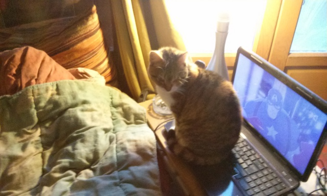 DUCHESSE - chatte femelle, née 2011/2012, borgne - (PASCANI) - adoptée par Chantal Pascal (dpt 63) - Page 5 222914112