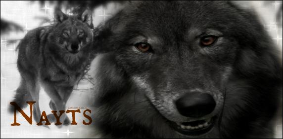 Avis à tous les loups de Sarkan : Alignement 224533NAYTSS2