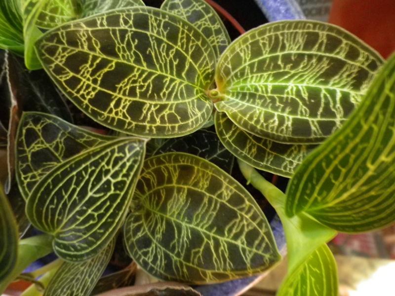 Mes quelques orchidées... 226327IMGP3883